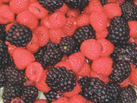 National Berry Month