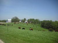 Boeckmann Farm