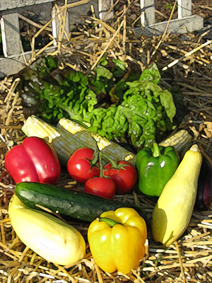 Healthy Planet Guide To Area CSAs