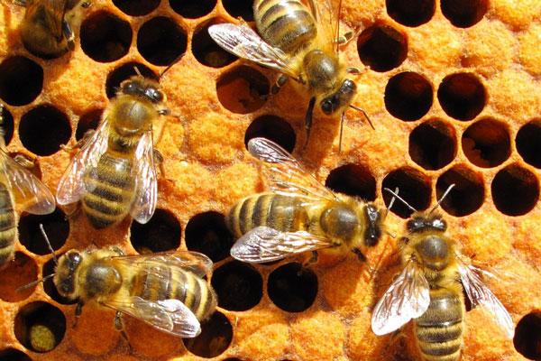 Eastern Missouri Beekeepers Association