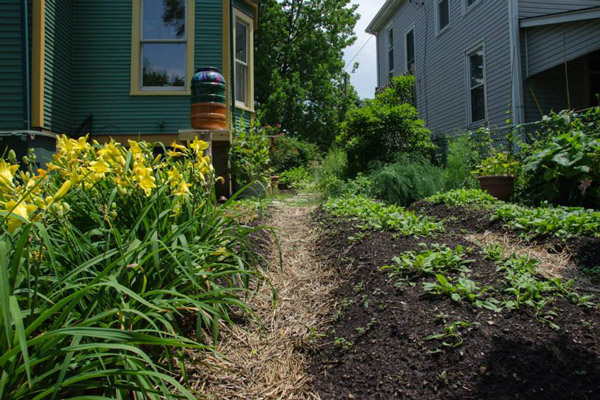 Sustainable Backyard Tour